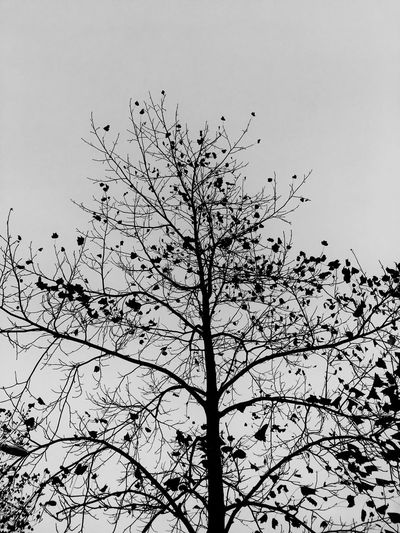 Tree. Black and white. Tree Branch Nature No People Sky Clear Sky Outdoors 나무 겨울 하늘 흑백 木 冬 黒白 空