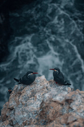 High angle view of black birds perching on cliff by sea