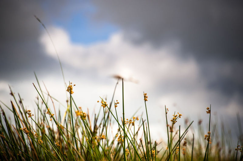 riding low in my the canoe looking up at all the flowered tall grass around me, breathtaking Beauty In Nature Close-up Cloud - Sky Flower Flowering Plant Freshness Grass Growth Meadow Nature No People Plant Sky Springtime Tranquility