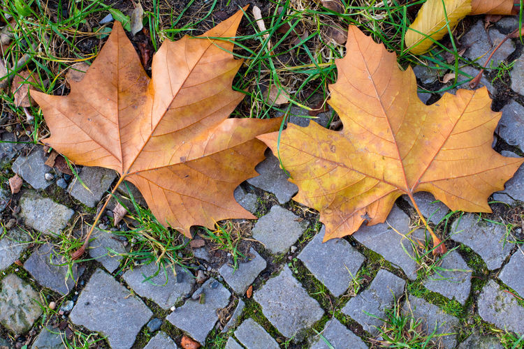 Autumn leaves lie on a walkway Autumn Leaves Road Sidewalk Autumn Beauty In Nature Close-up Danger Of Slipping Day Fall Fragility High Angle View Leaf Leaf Vein Leaves Maple Leaf Natural Condition Natural Pattern Nature No People Orange Color Outdoors Plant Plant Part