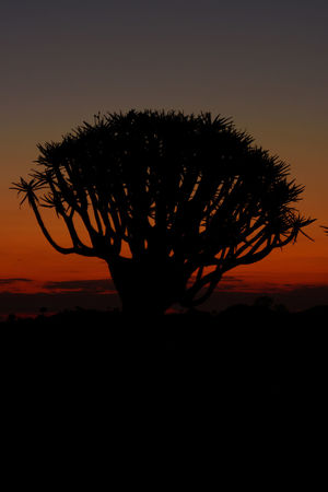 Beauty In Nature Namibia Nature No People Quivertree  Red Sky At Sunset Silence Silhouette Sunset