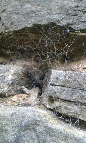Cobwebs Ownphotography Summer Ownphotos Photograph My Own Photography Naturelovers Nature_collection Nature Cobweb Wall