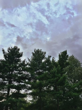Deceptively Simple Trees Colorsinthesky