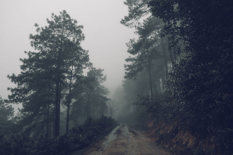 Forest road Fog and rain in the evening Tree Plant Fog Direction Nature Road The Way Forward Sky No People Tranquility Forest Beauty In Nature Growth Transportation Non-urban Scene Day Land Tranquil Scene Outdoors Hazy