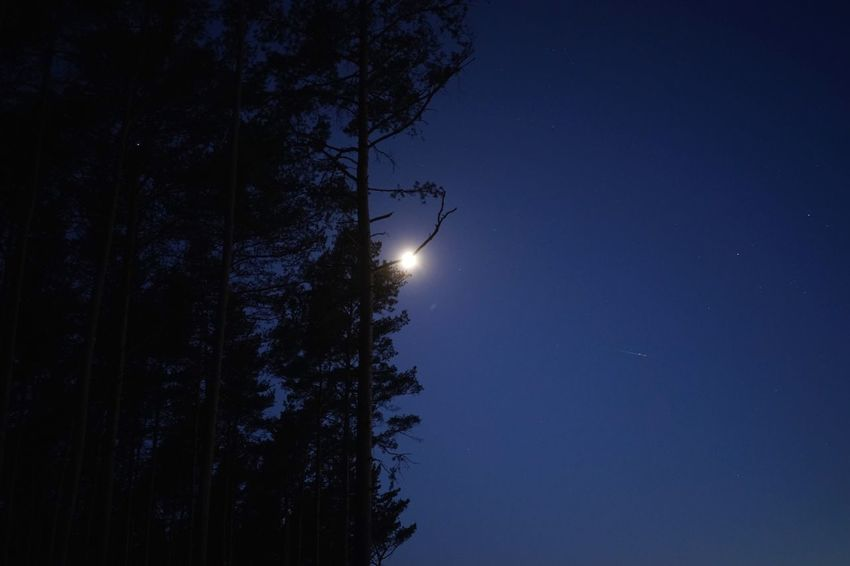 Once in a blue moon Tree Sky Night Beauty In Nature Low Angle View Plant Tranquility Scenics - Nature Star - Space Astronomy Space Tranquil Scene Star Moon No People Idyllic Nature Blue
