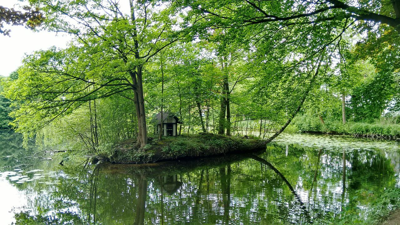 tree, reflection, water, nature, lake, waterfront, beauty in nature, tranquility, tranquil scene, outdoors, green color, day, no people, growth, branch, scenics, willow tree, forest, sky