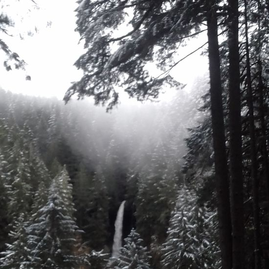 Tree Fog Nature Pine Woodland Beauty In Nature Water Outdoors Tranquility Forest Scenics No People Freshness Waterfall Weather Snow