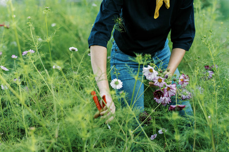 Midsection of person holding flowering plants on field