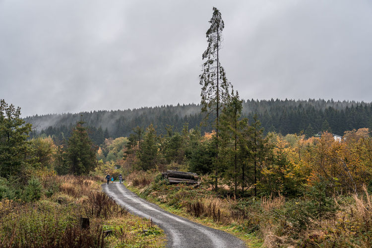 Road amidst trees against sky in forest
