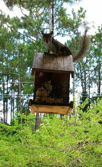 From My Doorstep Home Sweet Home Goodmorning! Hungry Birdfood Feeding Squirrels Breakfast Hellothere Floridalife Summer2015