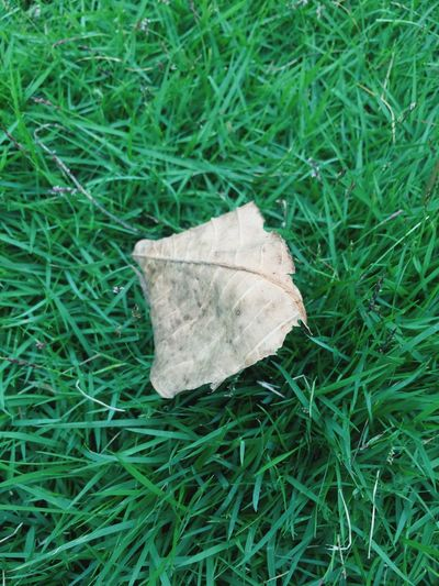 Grasses Grass Leaf Dry Green Color Field Close-up High Angle View Grassy Nature Change Tranquility Fallen Leaf Fragility Damaged Outdoors Natural Condition Beauty In Nature