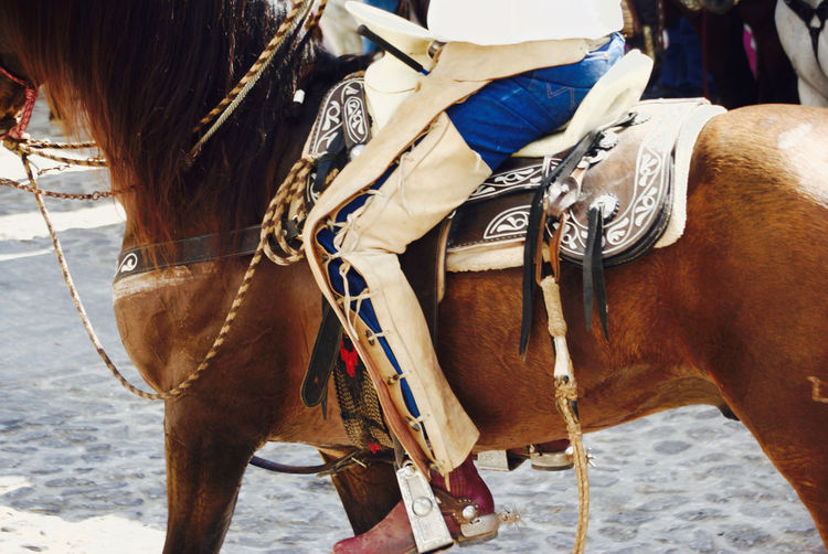 Rear view of horse standing outdoors