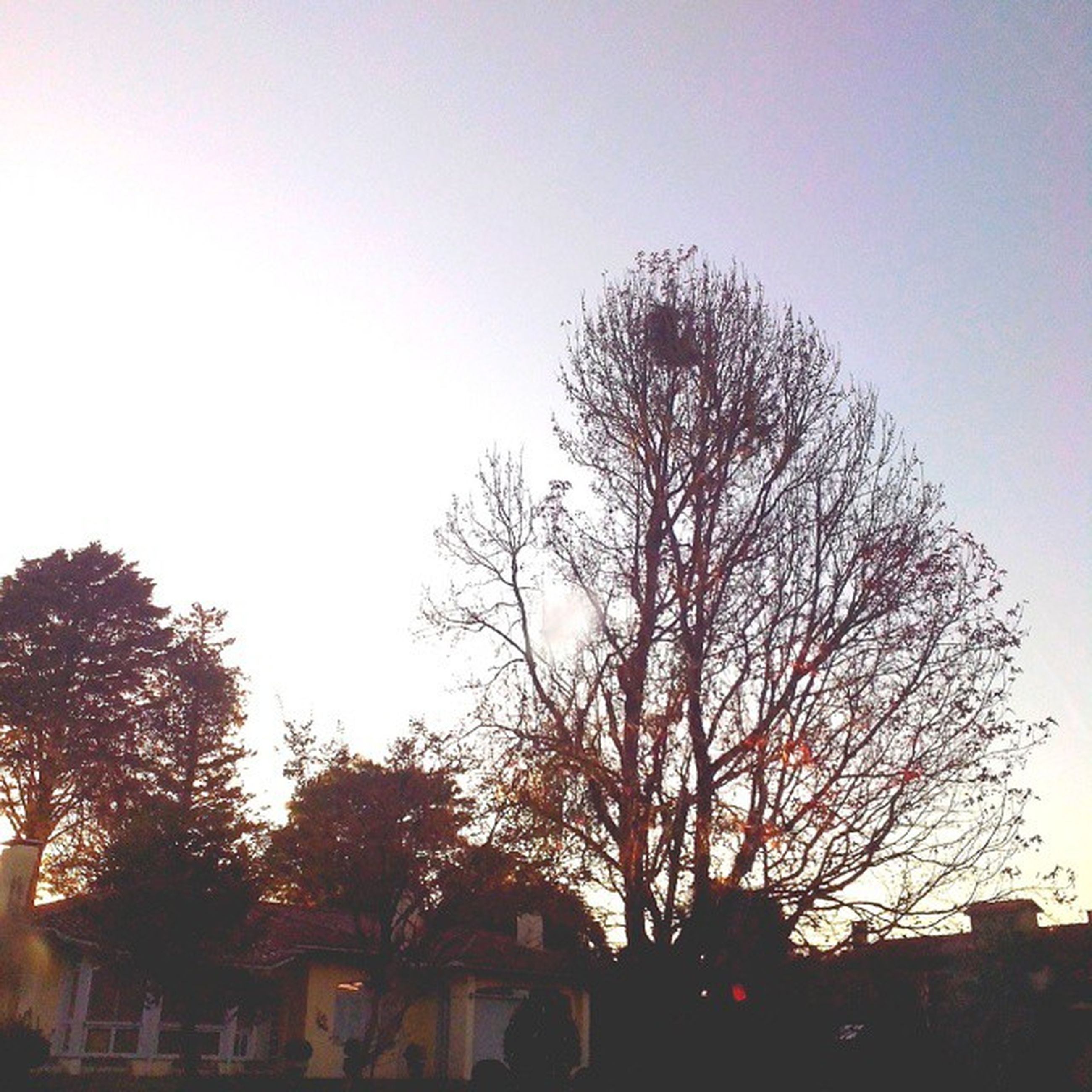 tree, building exterior, clear sky, built structure, bare tree, architecture, silhouette, low angle view, branch, sunset, house, sky, copy space, growth, nature, outdoors, residential structure, no people, dusk, residential building