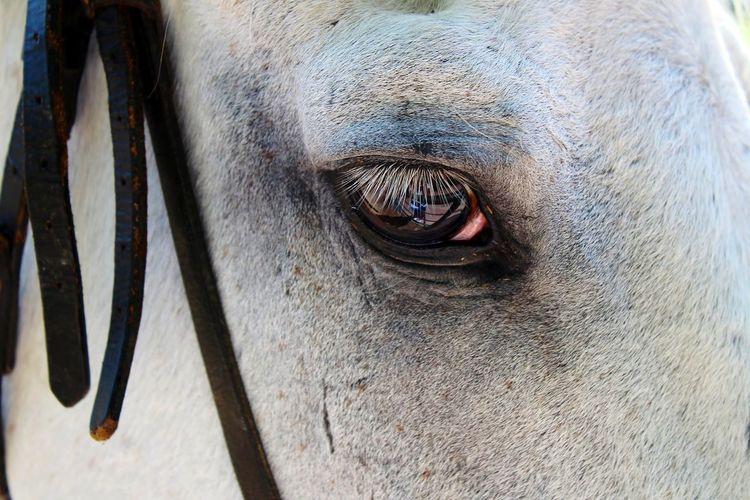Close-up of a horse