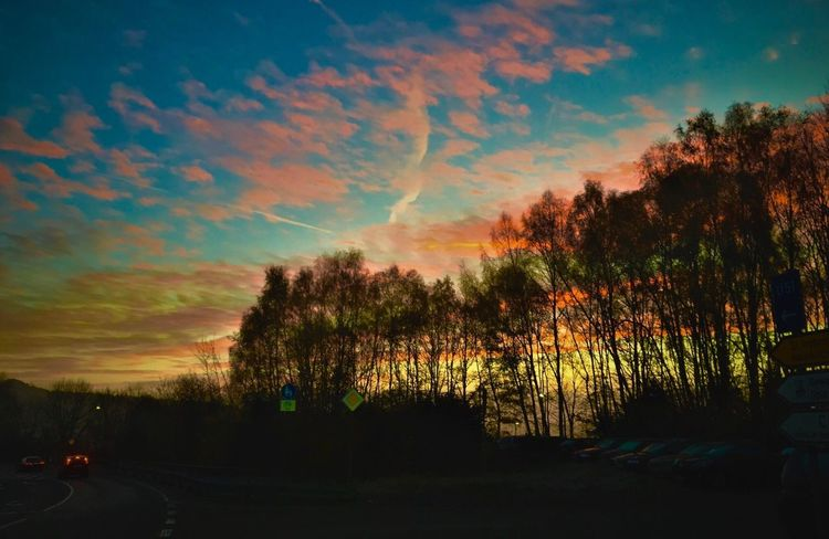 Beauty In Nature Sunset_collection Light And Shadow Tree Sunset Sky Nature Silhouette Scenics Tranquility Tranquil Scene Cloud - Sky No People Outdoors Growth Multi Colored Day Sunset And Clouds  Eyeem Streetphotography EyeEm Streets Street Photography
