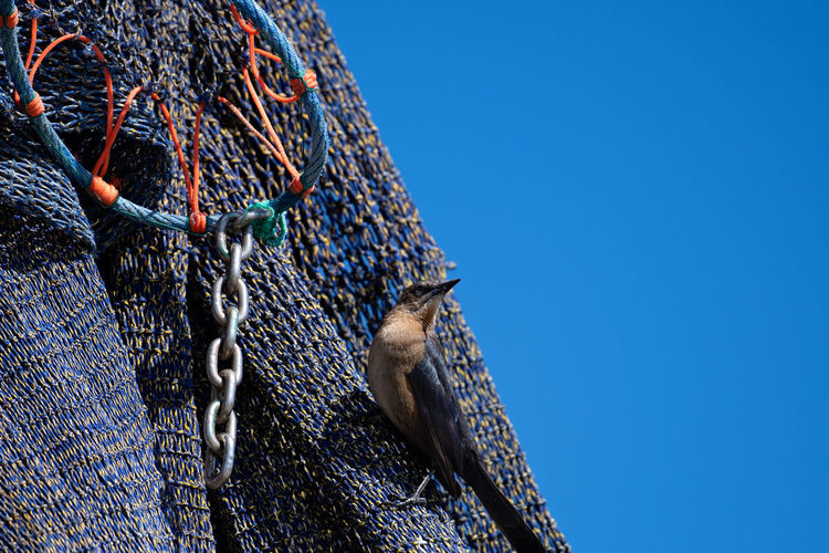 Low angle view of fishing net against clear blue sky