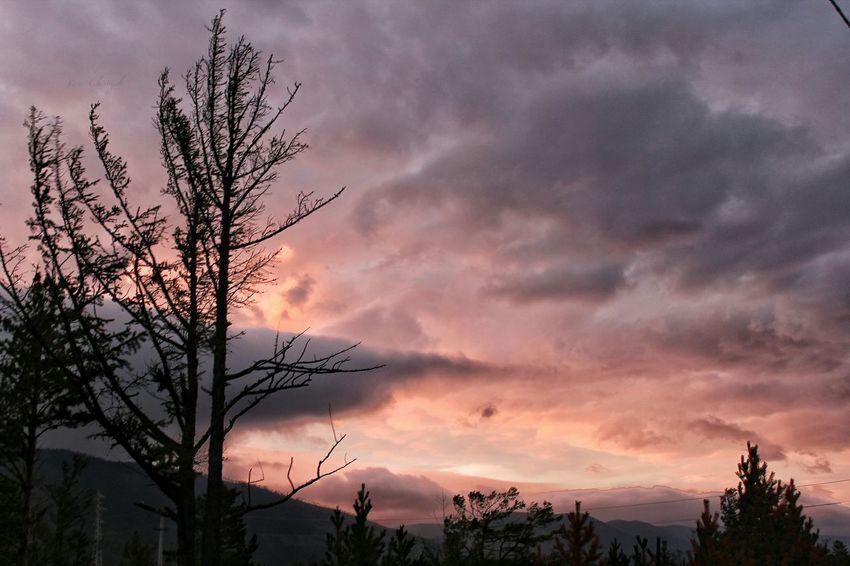 Закат Малого моря. Tree Beauty In Nature Sky Bare Tree Cloud - Sky Cloud Nature Atmospheric Mood Romantic Sky Dramatic Sky Orange Color Tranquil Scene Sea Cloud Tree Atmosphere Nature Baikal Beach Water Beauty In Nature Tourism
