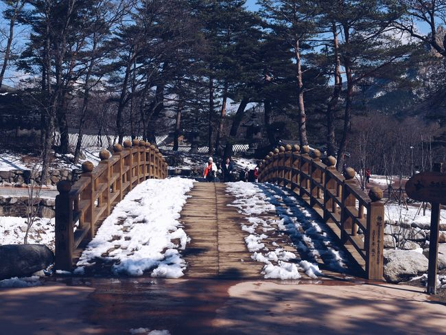 Architecture Nature Shadow Built Structure Tree Sunlight Outdoors Bridge Snow