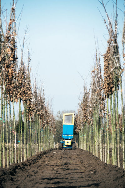 In a tree nursery Bare Tree Clear Sky Day Machine Nature No People Outdoors Rural Scene Sky Transportation Tree