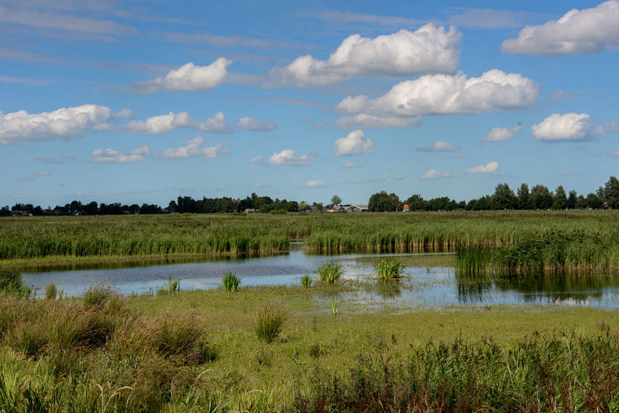 Waterland cycle route in Overijssel, Holland Netherlands Overijssel The Netherlands Waterland Fietsroute Weerribben Weerribben Wieden Beauty In Nature Cloud - Sky Day Grass Holland Landscape Nature Outdoors Reflection Scenics Sky Tranquil Scene Tranquility Waterland