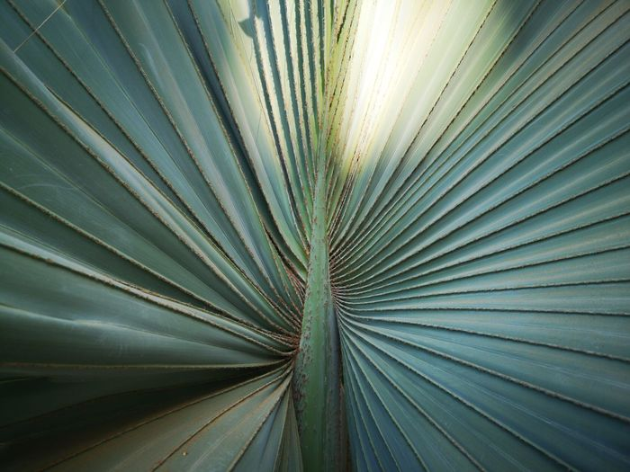 Detail shot of palm leaf