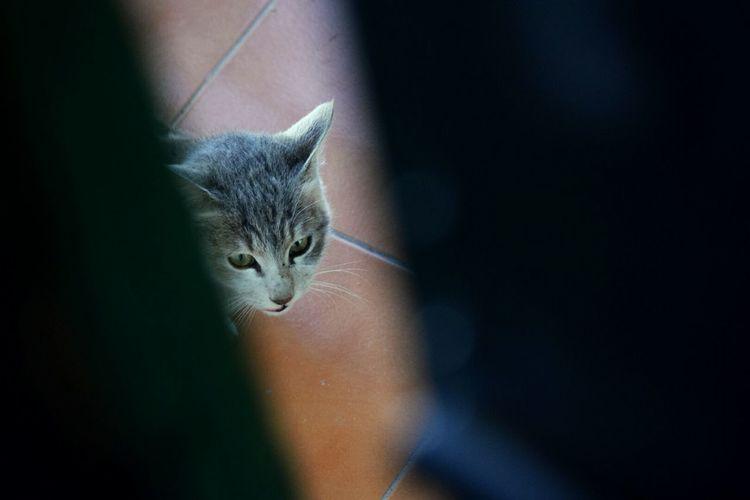 A peek. Cat Peeking Peekaboo Grey Animal Shadow Nature's Diversities Wild Wildlife