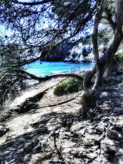Beach Nature Sea Water Tree Day Tranquility Beauty In Nature No People Branch Menorca Platja D'es Banyul