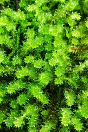 Green Color Growth Nature Green Plant Lush Foliage Beauty In Nature Leaf No People Backgrounds Outdoors Freshness Day Close-up Tasmania