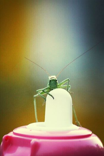 Insects  Grasshopper кузнечик EyeEm Nature Lover