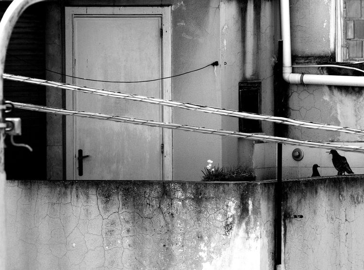 Architecture Balcone Bianco E Nero Building Exterior Built Structure Door Italy No People Outdoors Piccioni Pigeon Bird  Pigeons Porta Primavera Rometta Rometta Marea Sicily Spring Volatile White And Black