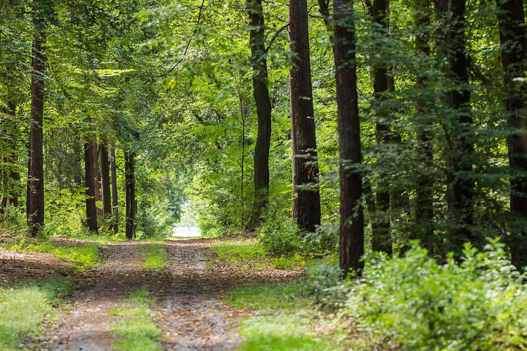 Road Beauty In Nature Day Forest Growth Nature No People Outdoors Tranquility Tree Tree Trunk