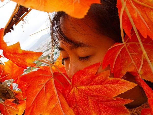 Leaf Autumn Headshot Rural Scene Beauty Orange Color Flower Tree Close-up Sky