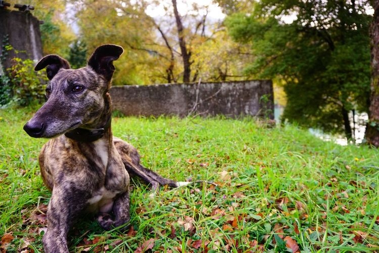 Modellin Dog Pets Domestic Animals Grass Outdoors One Animal Nature Green Color No People Animal Themes Eye4photography  Sony A6000 The Purist (no Edit, No Filter)