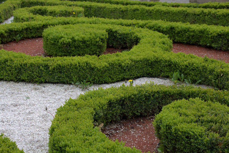 Curve Day Garden Garden Photography Green Green Color Green Color Growth Maze Nature No People Outdoors Plant Puzzle  Breathing Space