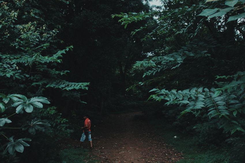 EyeEm Best Shots Woods Getting Inspired EyeEmBestPics EyeEm Gallery Light And Shadow EyeEm Selects EyeEm Best Edits Forest One Person Tree People Full Length Adult Pinaceae Outdoors Nature Adventure Pine Tree