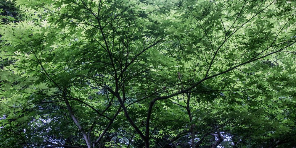 Kyoto leaves