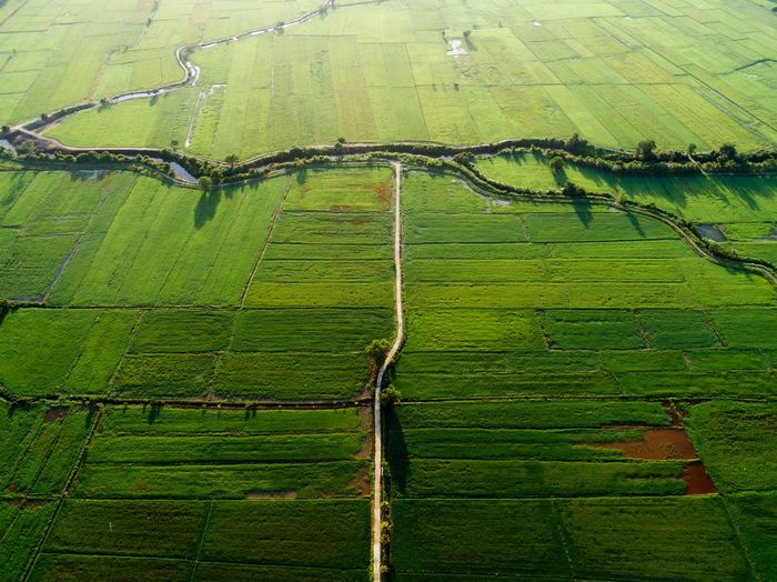Beautiful sunrise colors of paddy field Green Color Rural Scene Landscape Agriculture Farm Growth Environment Plant Aerial View Land Field Scenics - Nature Beauty In Nature Nature No People Full Frame Day Crop  Tranquil Scene Tranquility