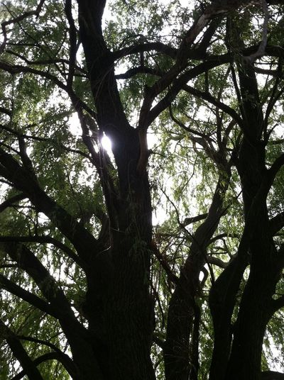 Look Up And Thrive The purist - no edits Hugging A Tree Nature Collection Sun Shining Bright