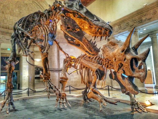 New Edit, Old Photo Los Angeles, California Check This Out Travel Photography Vacation Museum Dinosaurs HDR