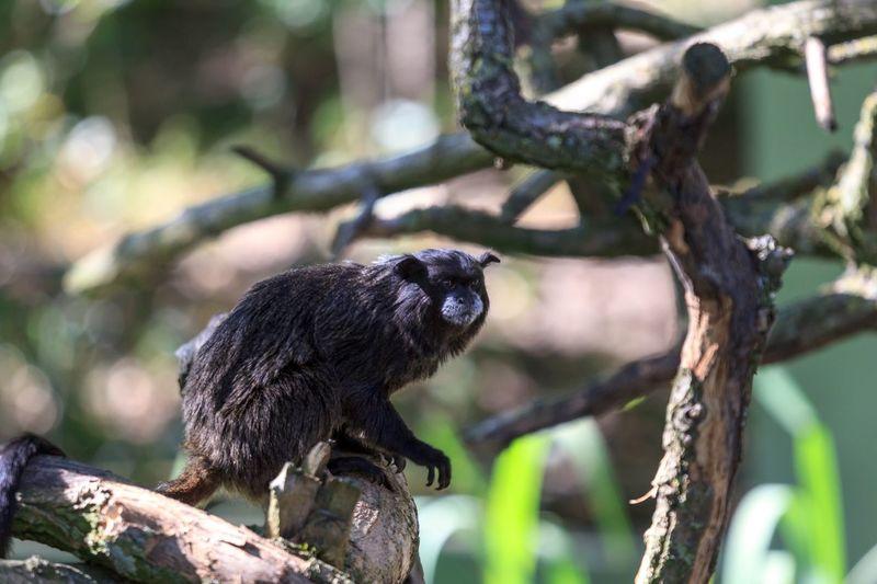 Baum Affe Animal Wildlife Animal Animal Themes Animals In The Wild Tree One Animal Primate Nature Monkey