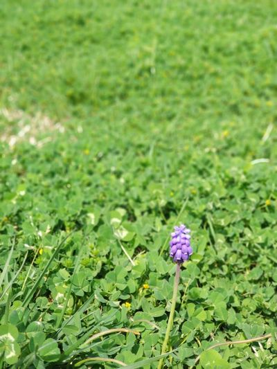 Flower Head Flower Field Insect Close-up Grass Animal Themes Plant Green Color