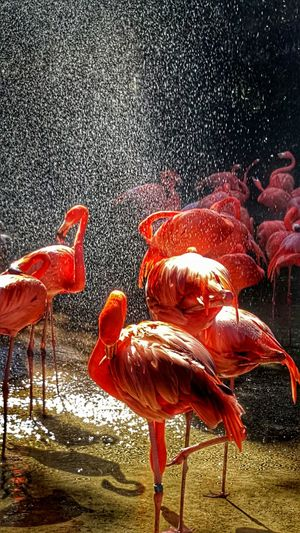 Flamingos Sunlight And Water Creative Light And Shadow Enjoying The Sunshine Fresno Chaffee Zoo Flamingos In Water Flamingo At The Zoo Wildlife Creative Light And Color Bird Photography Color Palette