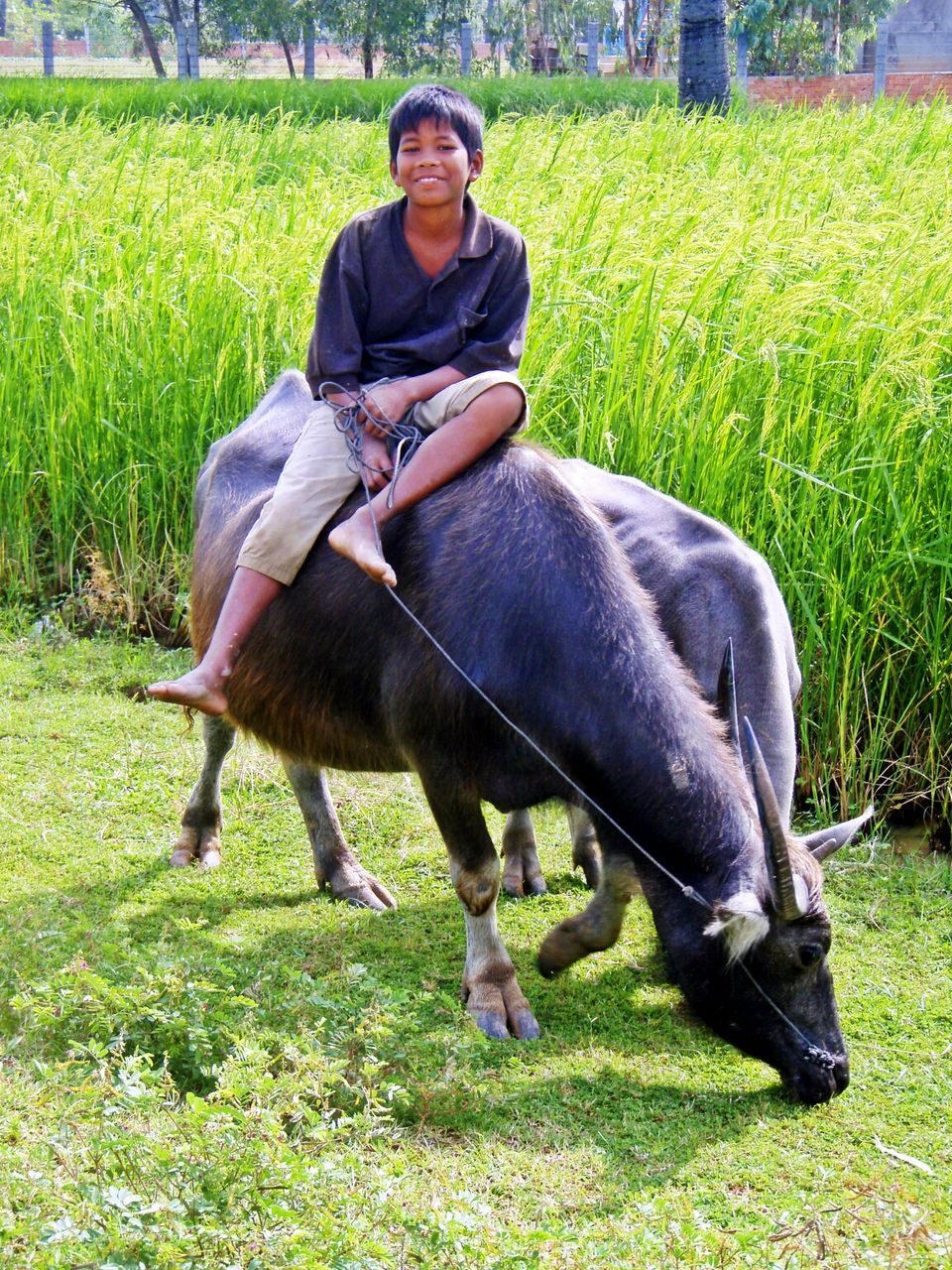 grass, field, farm, livestock, horse, one person, full length, agriculture, domestic animals, outdoors, one animal, happiness, day, one man only, riding, adult, sitting, rural scene, looking at camera, smiling, young adult, people, portrait, men, farmer, nature, real people, mammal, adults only, only men