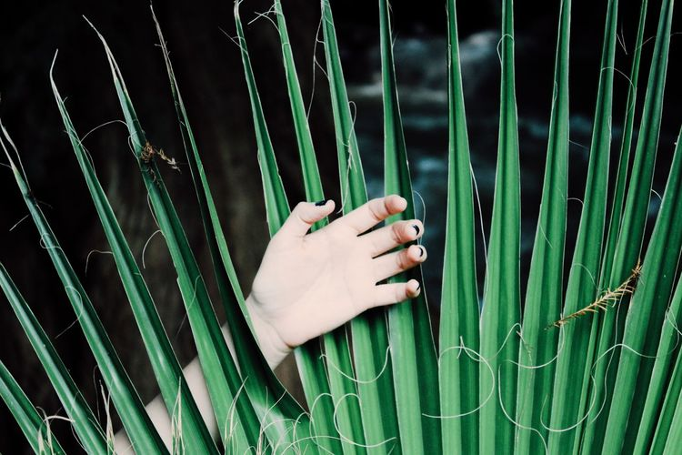 Cropped image of woman hand amidst palm leaf