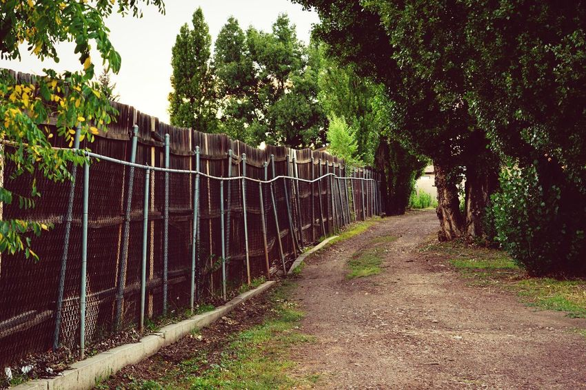 Trees Green Color Road Tree Sky Chainlink Chainlink Fence Gate Boundary Fence