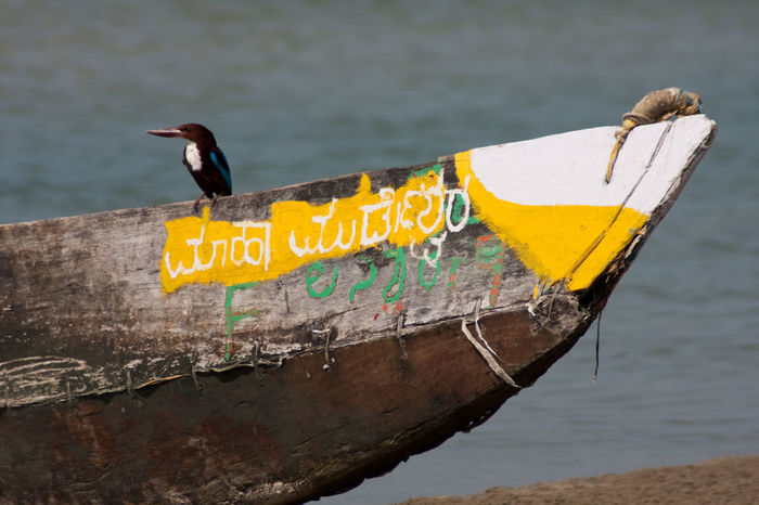 weathered fishing boat at the beach... with a bird Animal Themes Animals In The Wild Beach Bird Boat Day Fishing Boat India No People Old Boat One Animal Outdoors Sand & Sea Vibrant Color Water Weathered Boats Weathered Wood Yellow Yellow Color