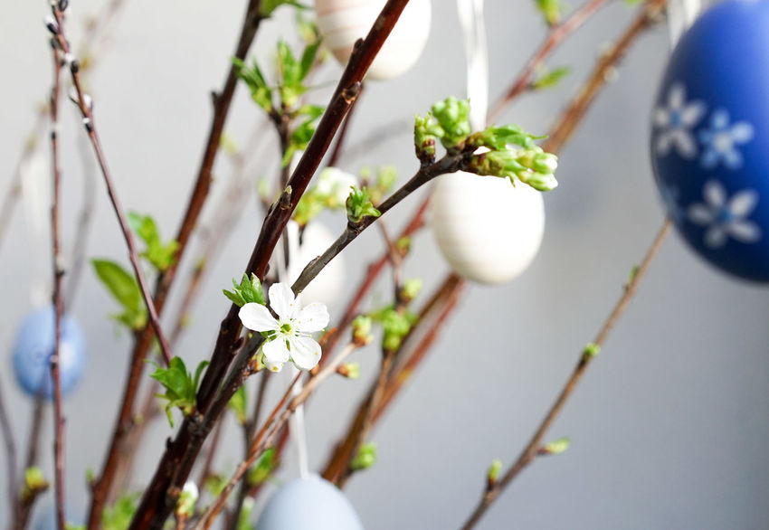 Easter Eggs Osterstrauch Eastern Ostern Plant
