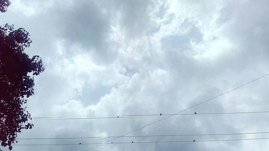Birds, Cloud