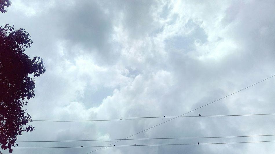 Birds, Cloud and tree Ssclix SSClicks SSClickPics SSClickpix Mobilephotography Monsoon Season Bird Flying Flock Of Birds Technology Storm Cloud Silhouette Sky Cloud - Sky Power Line  Power Supply Electricity