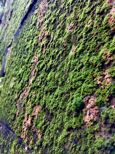 Plant Green Color No People Growth Day Moss Nature Wall